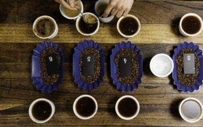 Koffie Cupping: proeven en beoordelen op een professionele manier